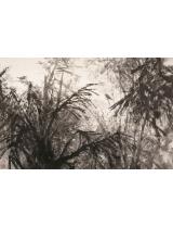 《雨林幽馨》142×218cm 2000年